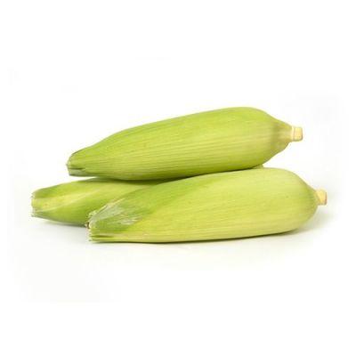 Sweet Corn/Mokkajonna/ Bhutta, 2 pcs